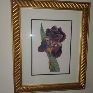 Wall Art - Iris